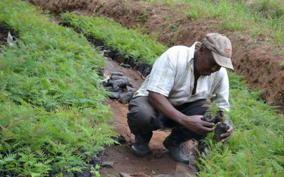 Ghana signs landmark deal to cut carbon emissions and reduce deforestation