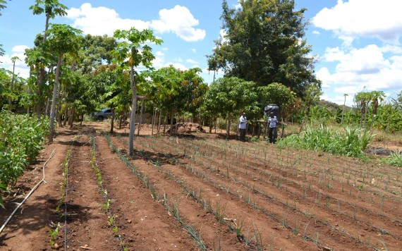Africa seeks to inject $9 billion to smallholder irrigation to boost Agriculture