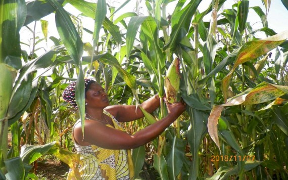 TV and Radio Information Programmes help Cameroon farmers cope with changing climate