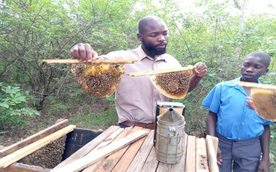 Dilemma of Zimbabwe's beekeepers as farm pesticides threaten honeybees