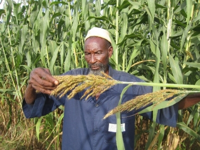 Sorghum in the Sahel: TAAT deploys climate smart technologies to boost production