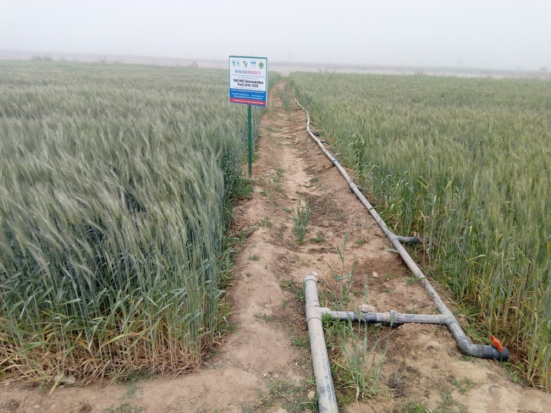 TAAT excites wheat farmers with proven water management technologies