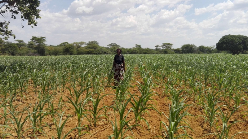 Prolonged dry spell threatens Zambia's 2017/18 Agricultural season